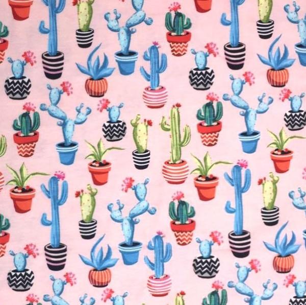 Kaktus rosa, Jersey
