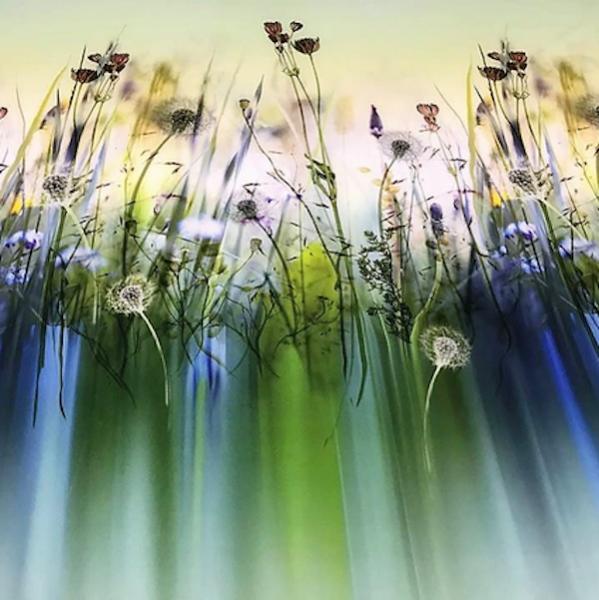Badeanzugstoff, Blumenwiese Rapport
